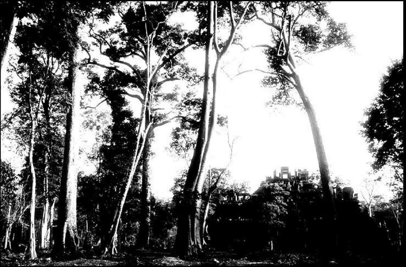 Анкор Ват заросший деревьями