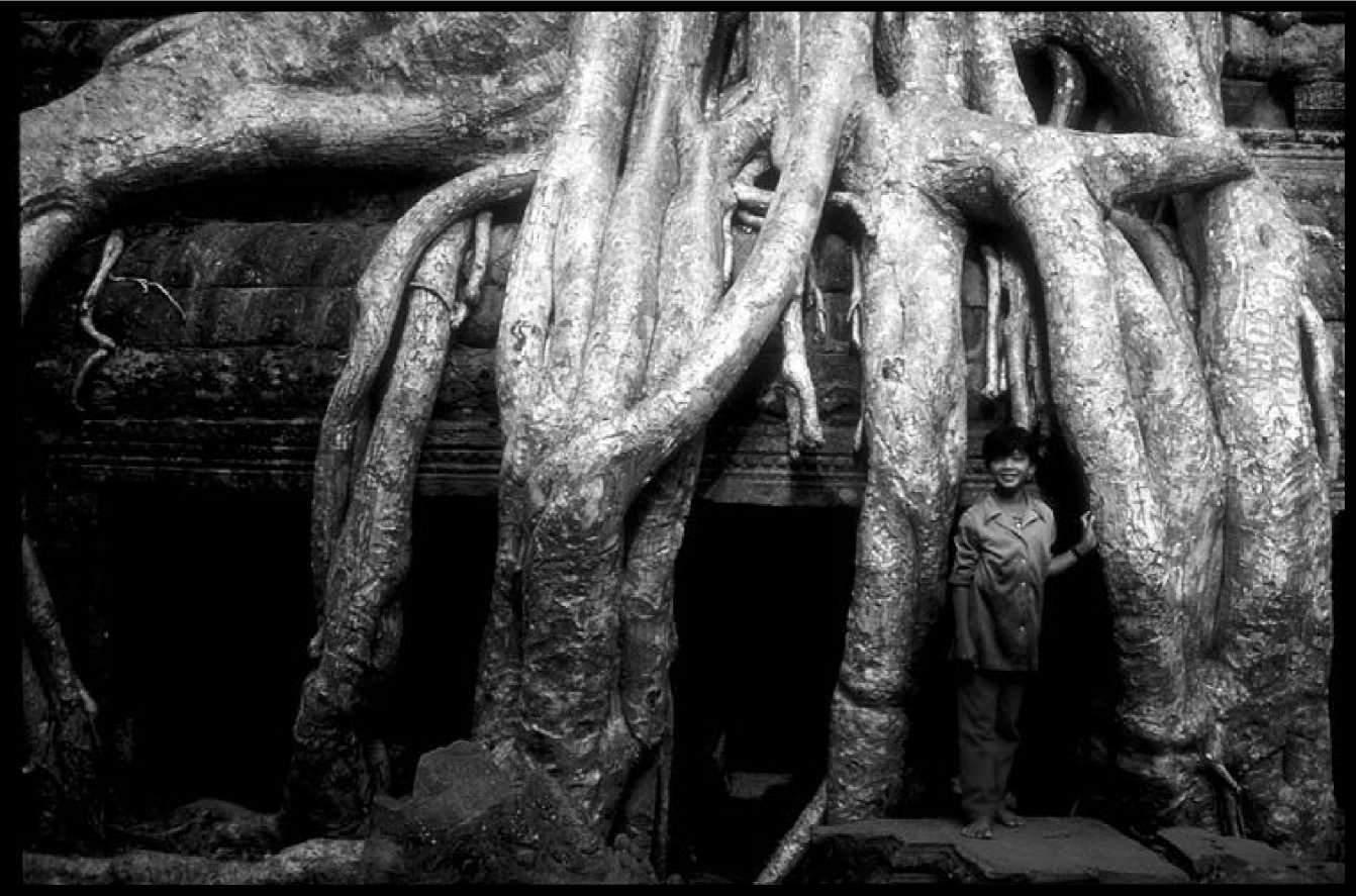 Деревья в Та Проме